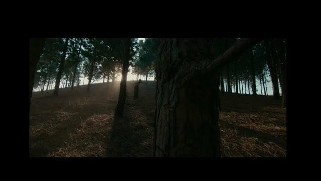 Fireboy DML Champion Video